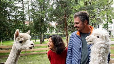 Xenius - Talentueux alpagas : des animaux aux multiples vertus