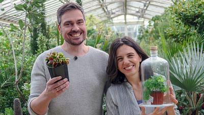 Xenius - Plantes intelligentes : quand la cognition se passe de neurones