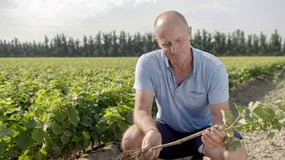 Geo Reportage - Le renouveau du vignoble français