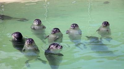 GEO Reportage - Mer du Nord, sauvons les  bébés phoques