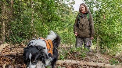 GEO Reportage - Des chiens sur la piste des loups