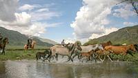 Kirghizistan - chevaux, les ailes de l'homme du 07/04