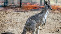 Feux de forêt en australie en streaming