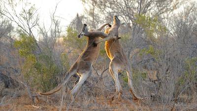 Au coeur de l'Australie sauvage