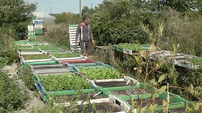 """Le projet """"Ackercrowd"""" repense l'agriculture"""