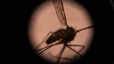 La chasse aux moustiques