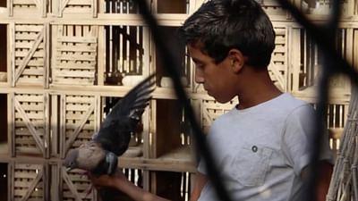 Portrait d'enfant : Mahmoud au Caire