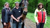 Arte regards - le retour du débardage à cheval en streaming
