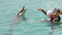Geo reportage - curaçao, des dauphins thérapeutes en streaming