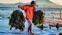 Indonésie, les cultivateurs de la mer en streaming