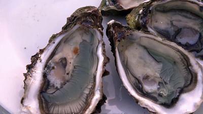 L'huître Marennes-Oléron, la miraculée