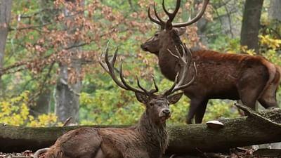 Dans les Ardennes, la forêt légendaire