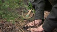 Les forêts d'Europe sont en danger et des militants s'engagent avec ardeur pour tenter de les sauver. Face au changement climatique ou aux abattages en surnombre, des associations, gardes forestiers ou éleveurs se mobilisent, chacun à leur manière, afin de préserver cette précieuse ressource qu'est la forêt et combattre les différents risques qu'elle encourt.