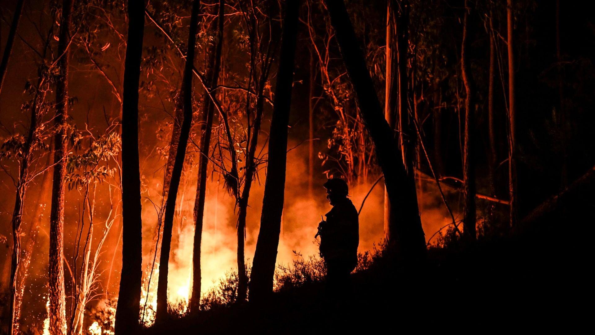 Mégafeux : chronique d'un désastre annoncé