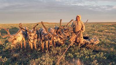 Il gasdotto di Gazprom e i pastori di renne