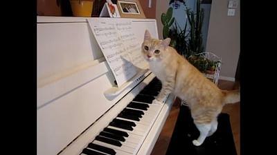 Il gatto, miglior amico dell'artista