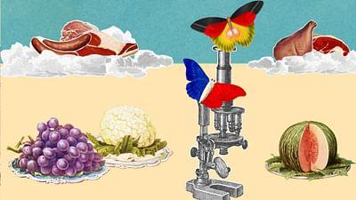 Dovremmo smettere di mangiare carne?