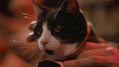 Kot, wzór do naśladowania