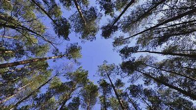 Lasy Ziemi