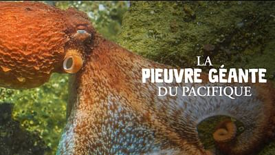 La pieuvre géante du Pacifique