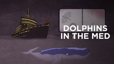 Dolphins in the Med